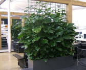 The right plants can reduce indoor pollution and save energy